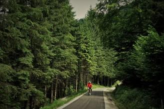 Radweg im Wald