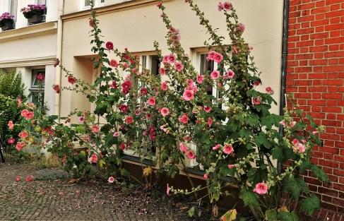 Lübeck Blumen