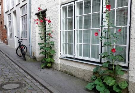 Lübeck Blumen 3