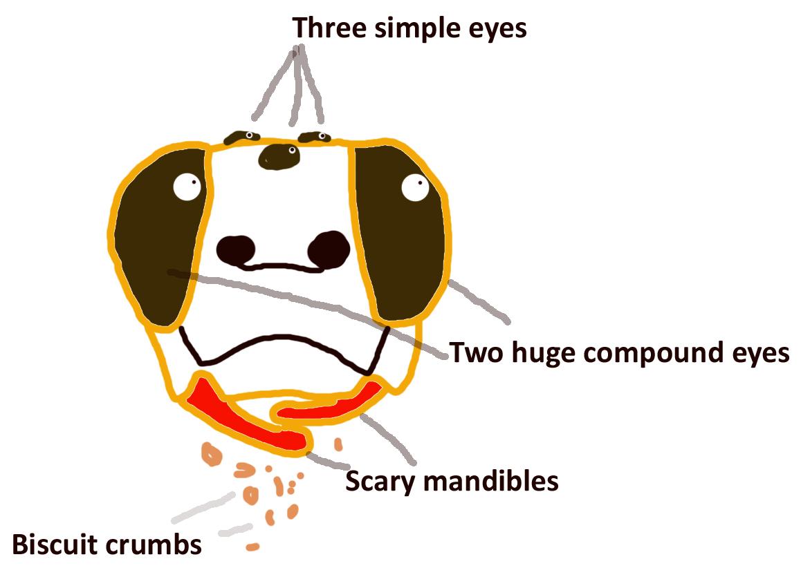 bumble bee diagram whelen strobe wiring edge 9000 more bees  pibees