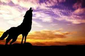 marketing spirit animal, wolf