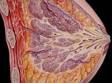 乳腺增生 - 搜狗百科