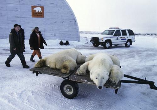 北極熊監獄 - 搜狗百科