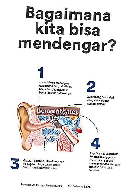 Gambar Telinga : gambar, telinga, Bahagian, Telinga, Beserta, Gambar, Penjelasan, Fungsinya