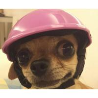DOG MOTORCYCLE HELMETS Pets Ridding Caps Cosplay Hat ABS ...