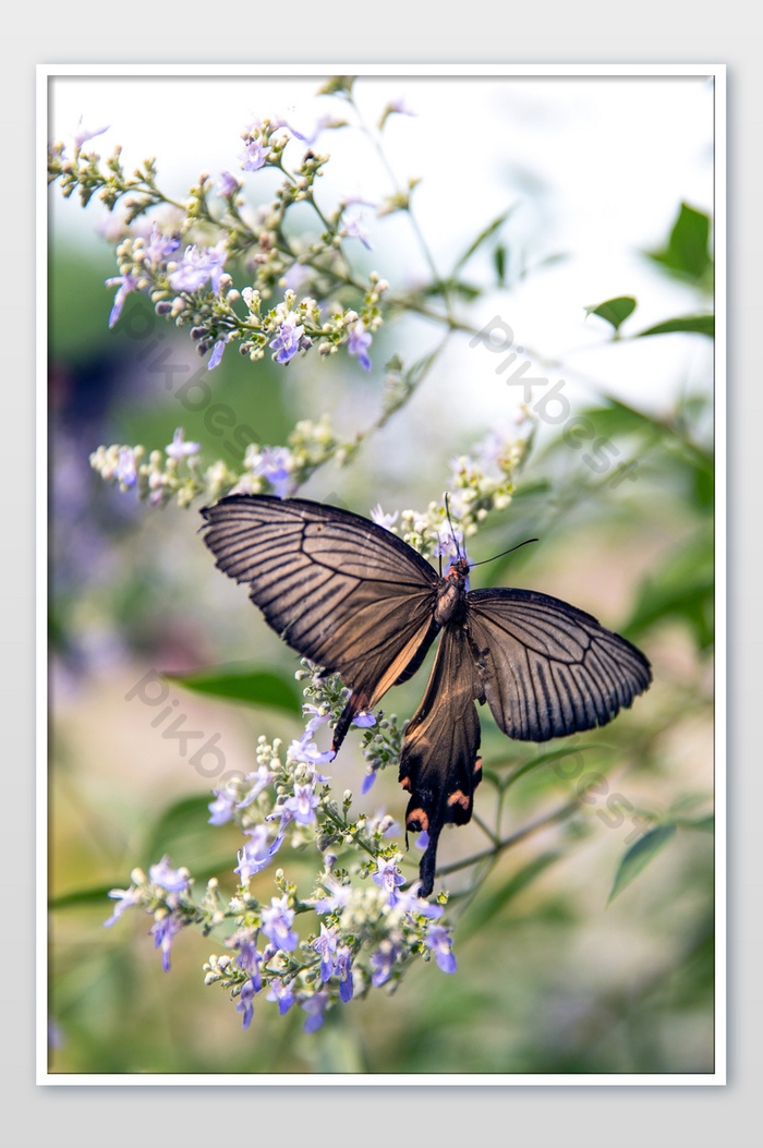 Gambar Kupu Kupu Dan Bunga : gambar, bunga, Bunga, Gambar, Fotografi, Kupu-kupu, Mekar, Templat, Unduhan, Gratis, Pikbest