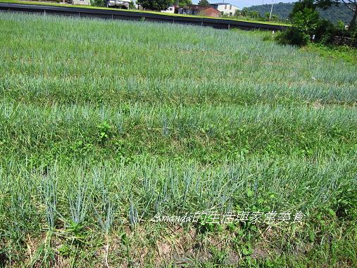 行建有機村-自然農法-青蔥