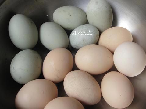 雞蛋-鴨蛋