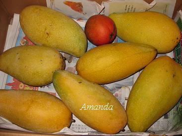 一大箱金煌芒果