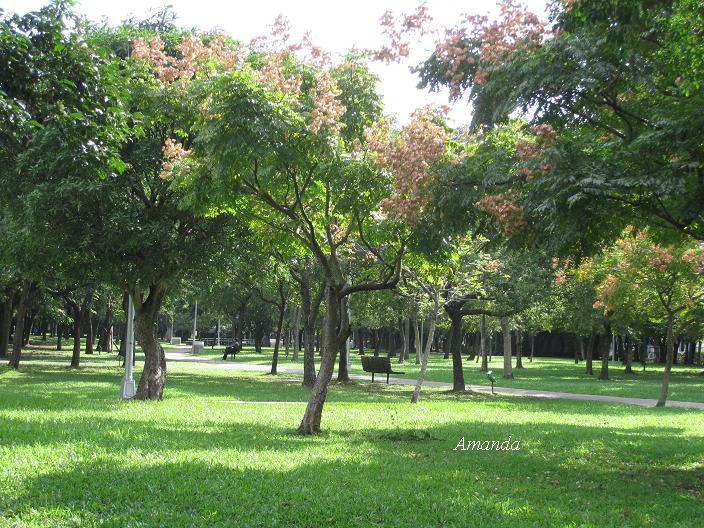 大安森公園5.JPG