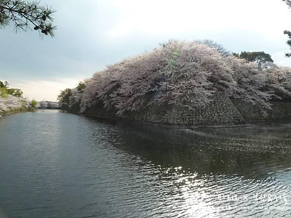 [[滋賀//遊樂]] 彥根城 - 琵琶湖畔的賞櫻景點