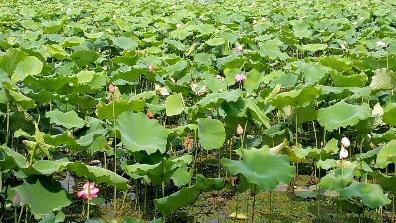 7杭州自由行-西湖-85.jpg