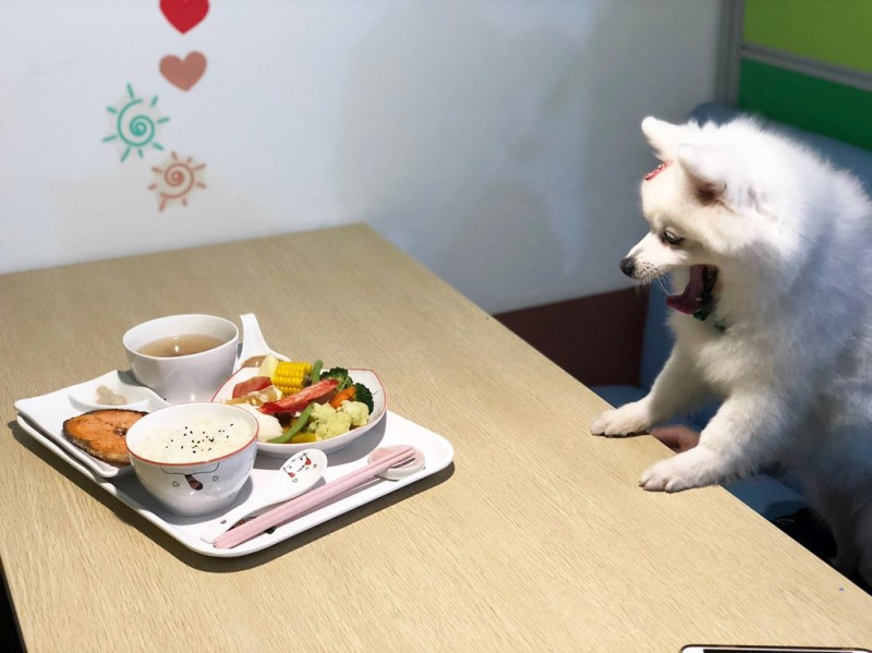 【台南安平寵物餐廳】推薦|凱荳家庭寵物餐廳