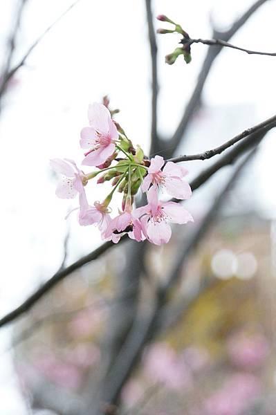 新莊美食推薦-櫻花樹下的La Pochette‧小口袋甜品新莊美食推薦-櫻花樹下的La Pochette‧小口袋甜品