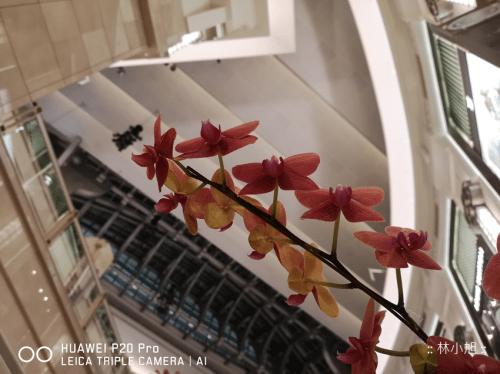 HUAWEI P20 Pro 實際拍照成果 (ifans 林小旭) (34).png