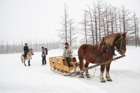 二月的北海道…..漫步在千年之森