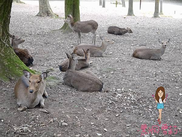 奈良公園-27.jpg