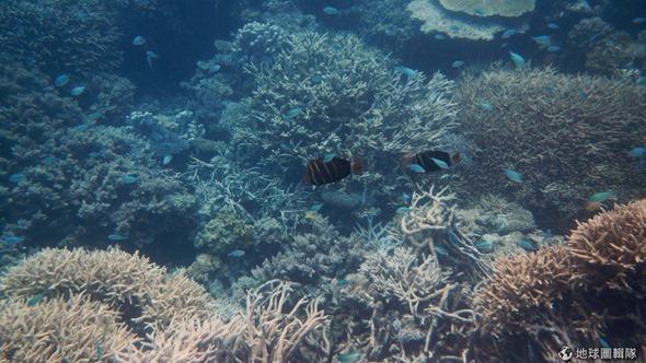 [早安! 地球] 美景危機! 澳洲大堡礁持續惡化 d1653ec599e33539