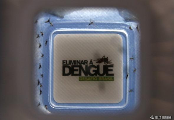 [早安! 地球] 對抗登革熱 巴西學者進行「蚊子打蚊子」計畫 9785423c0e120c63