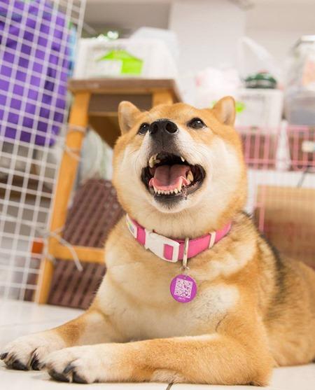 QR Code 寵物名牌,寵物晶片之外另一找回走失寵物的實用小物 10356721_893444687337133_9099462774578209780_n