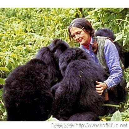 Google 首頁塗鴉:Dian Fossey 美國動物學家 82 歲誕辰 Dian-Fossey-1