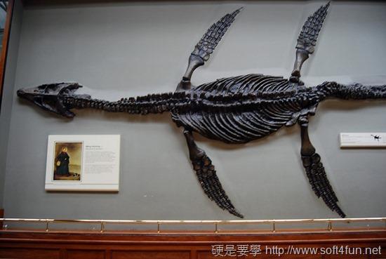 [Google Doodle] Mary Anning 英國古生物學家 215歲誕辰紀念 4507430089_ae03a202cf_z