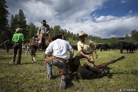 [早安! 地球] 最帥的環保工作 在群山間移動的美國牛仔 fce53c3a2d14752