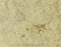 Isis Fossil Limestone Slabs Tiles, Egypt Beige Limestone ...