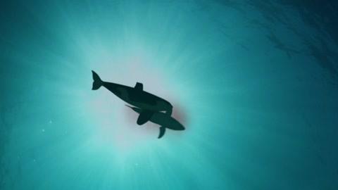 2018鯊魚週30週年特輯第2集-紀錄片-高清正版影音線上看-愛奇藝臺灣站