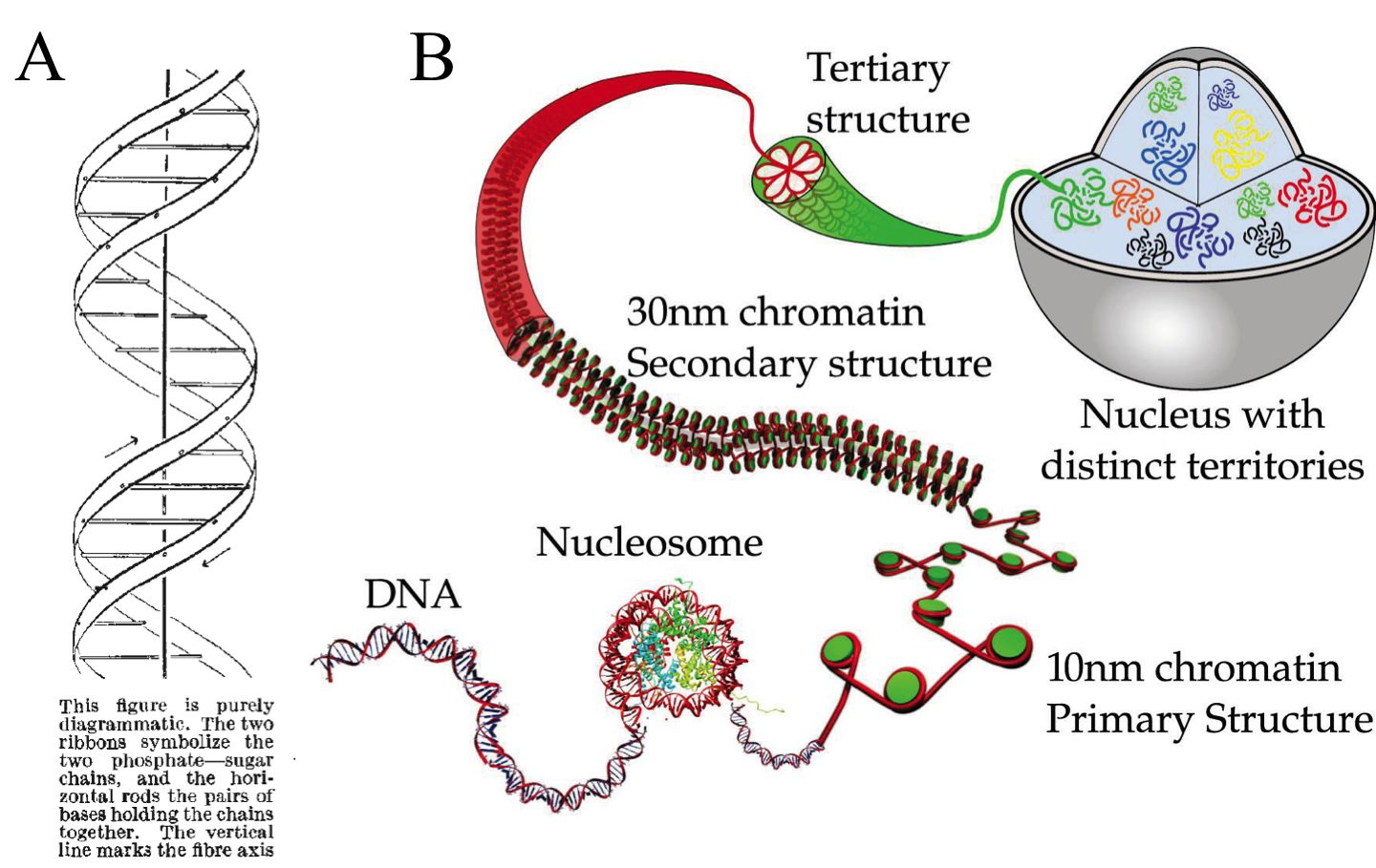 Chromosome Vs Chromatin 3d 基因组领域的重要进展:grid-seq 探索dna-rna的相互作用 - 知乎
