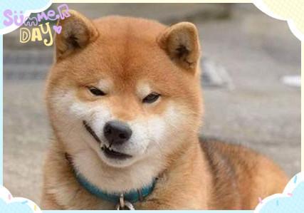 狗狗真的會笑嗎? 你知道什么! - 知乎