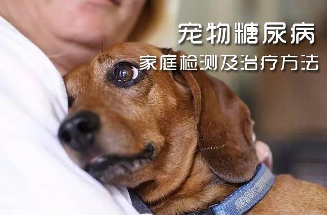 寵物貓狗得了糖尿病怎么辦?在家測血糖的實用方法 - 知乎