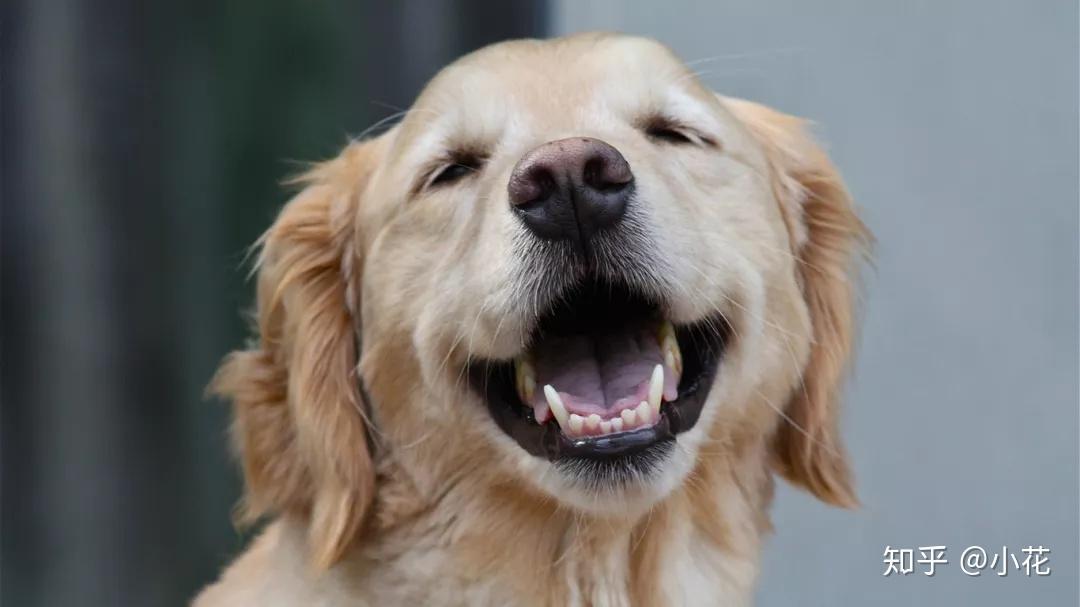 狗狗需要洗牙嗎? - 知乎