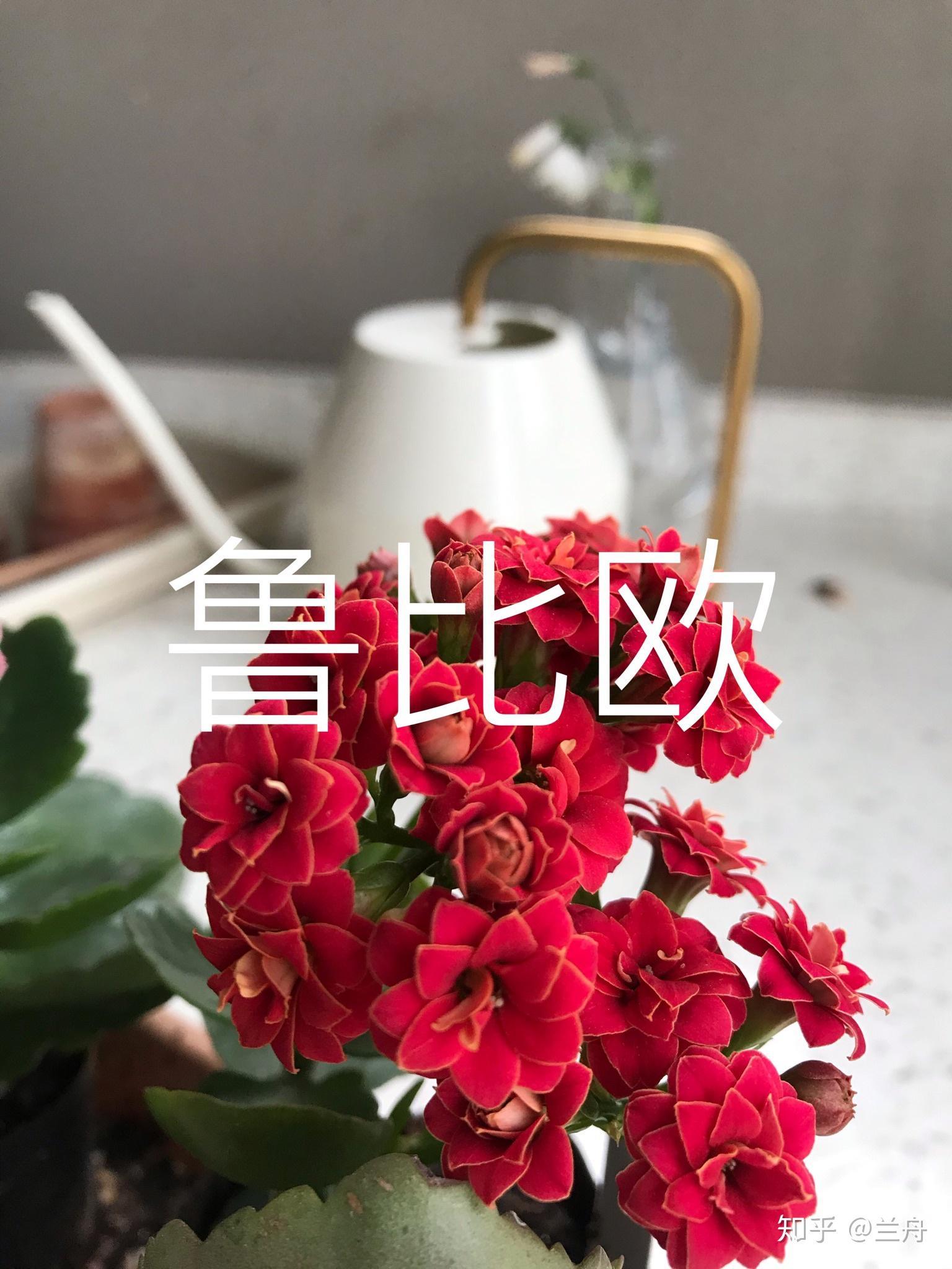 有沒有什么家里養的常開花的不容易養死的植物? - 知乎