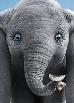 迪士尼真人版《小飛象》新版預告-娛樂-高清影音線上看-愛奇藝臺灣站