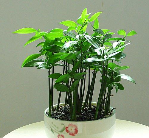 種子盆栽 @河畔小築 - nidBox親子盒子