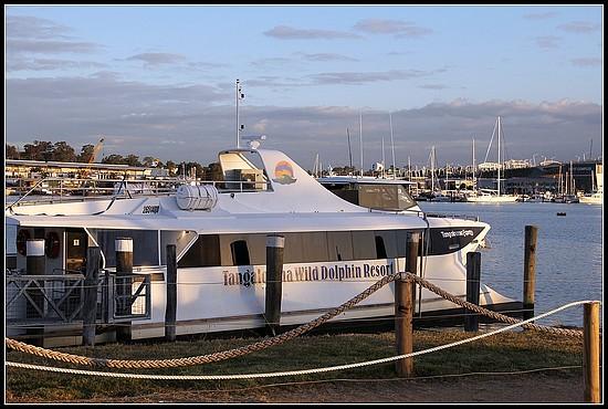 澳洲自由行day2 摩頓島餵海豚(Dolphin feeding at Tangalooma, Moreton Island) @想飛─快樂生活地圖 My Happy Life - nidBox親 ...