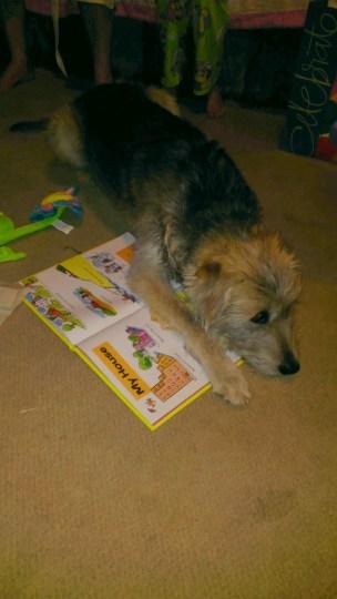 Puppies like books too.