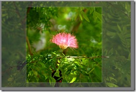 Picasa Tip: Resizing a Picture's Height and Width (3/5)