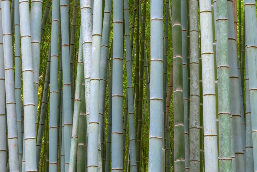 Kyoto Bamboo Groves