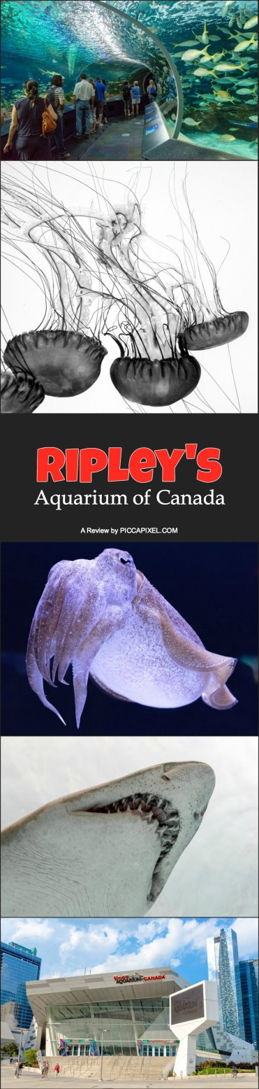 Ripley's Aquarium of Canada: Things to do in Toronto