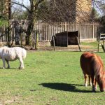 Springtime at Hounslow Urban Farm