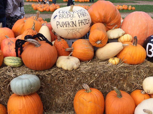 Crockford Bridge Farm Pumpkin Patch
