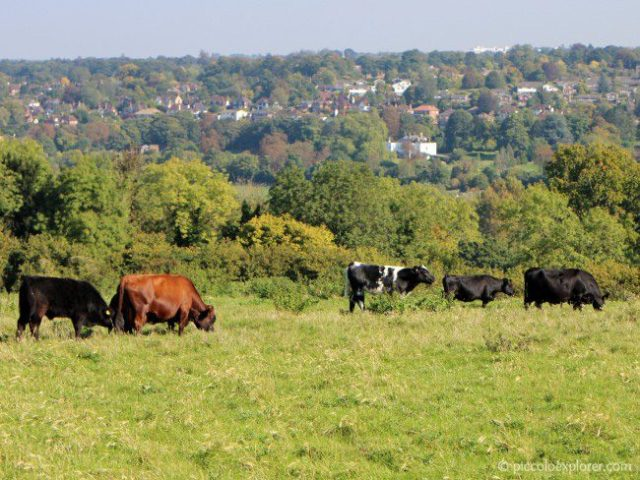 View of animals in fields at Bocketts Farm Park Surrey
