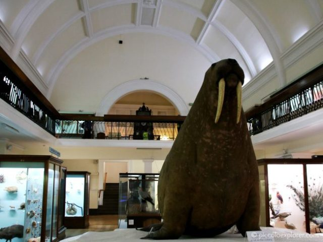 Family-Friendly London Museums - Horniman Museum