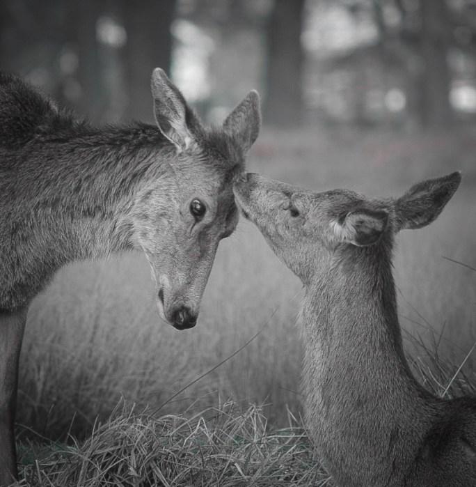 A Deer Love