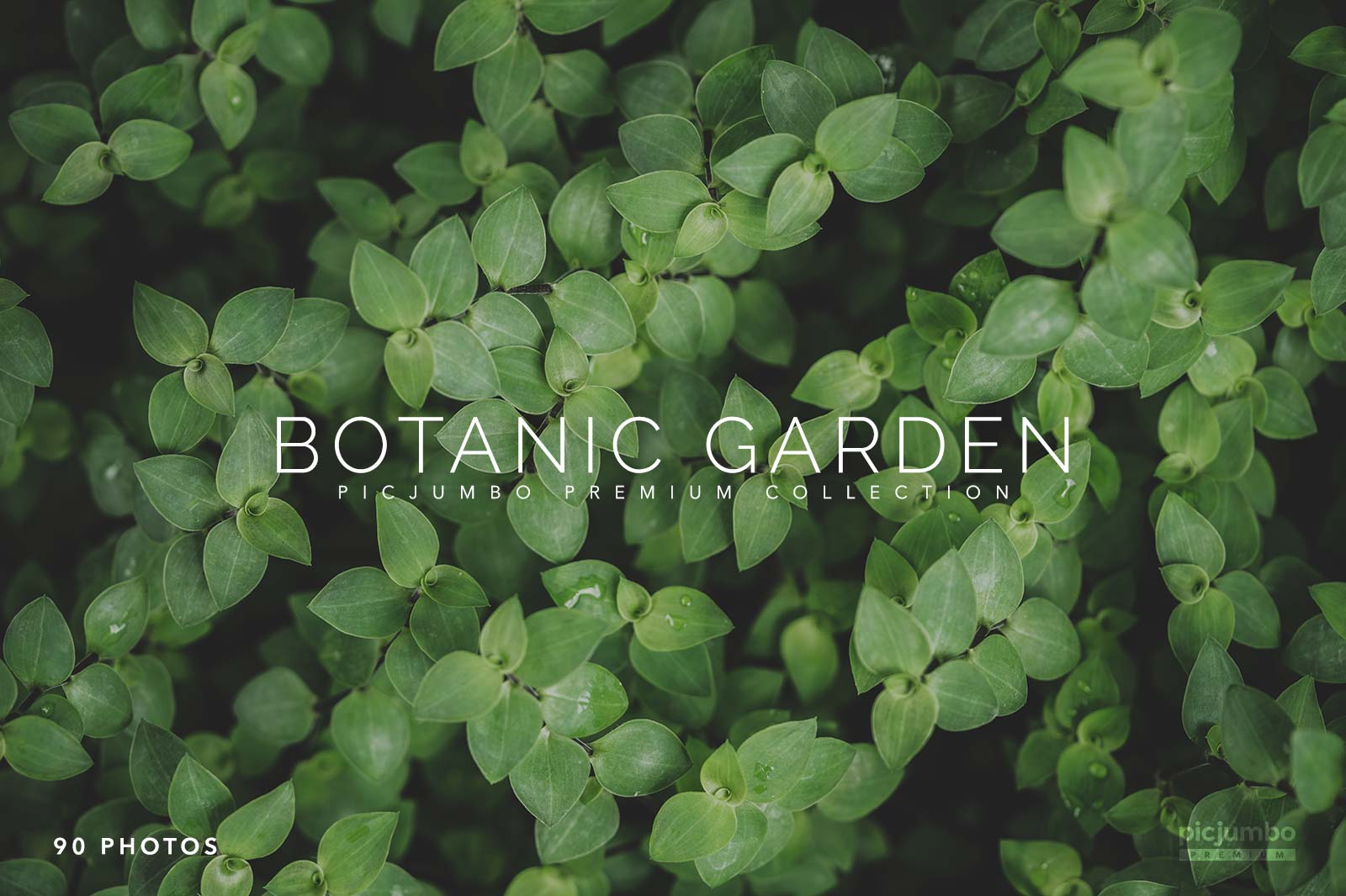 botanic-garden-premium-collection.jpg