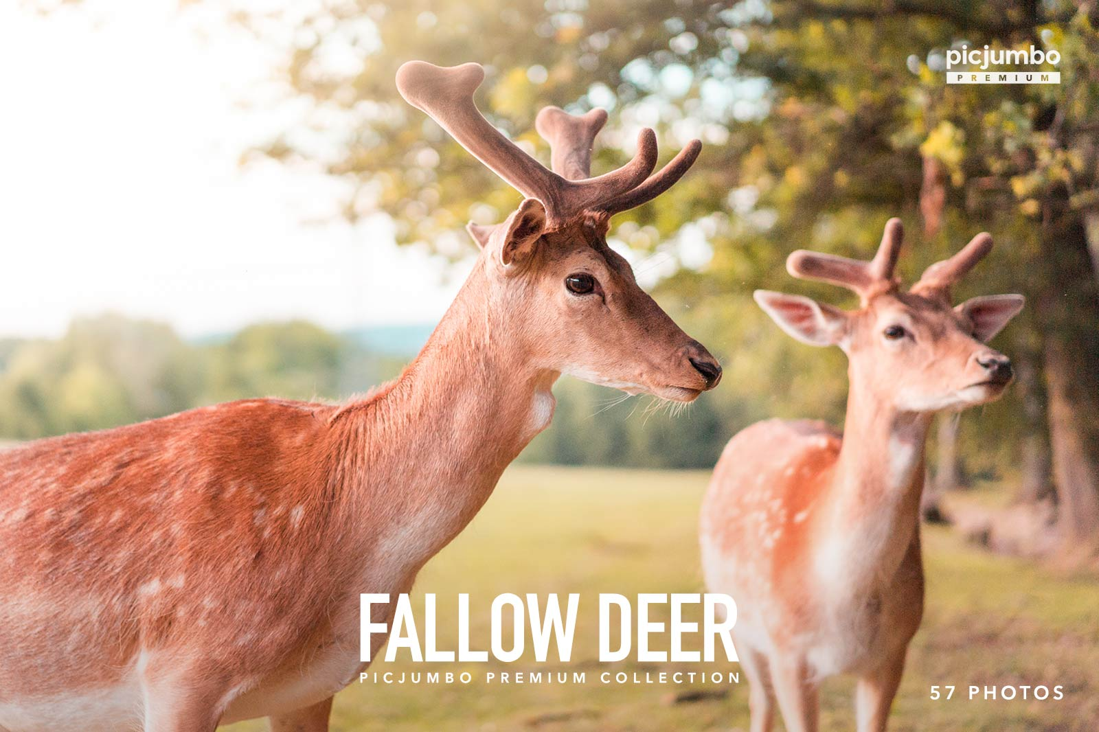 fallow-deer-picjumbo-premium-collection.