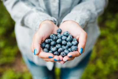 Download Handful of Blueberries Free Stock Photo