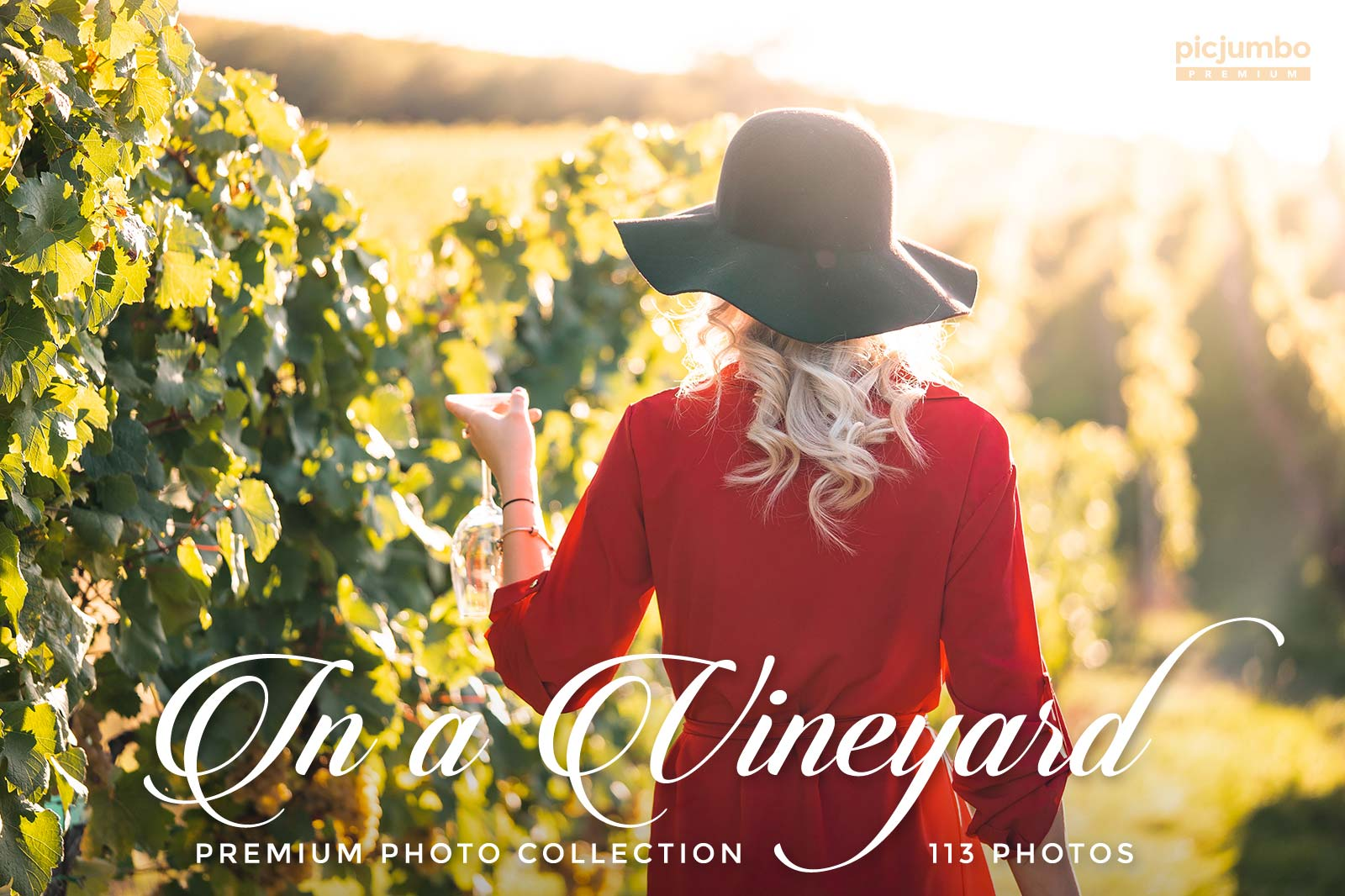 in-a-vineyard-stock-photos-picjumbo-prem